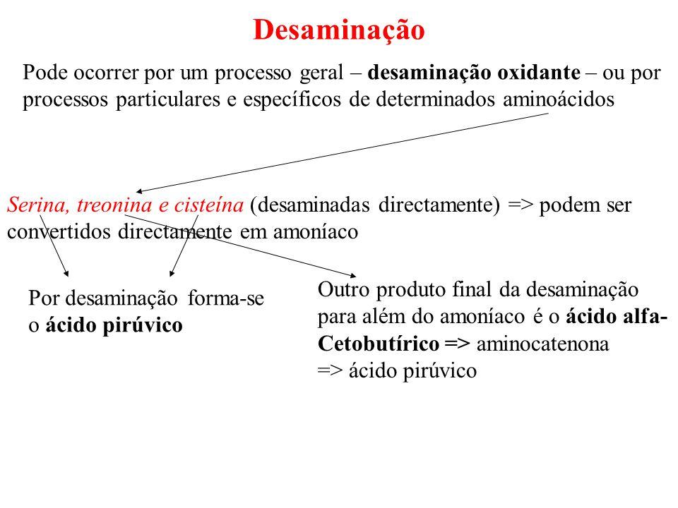 Desaminação Pode ocorrer por um processo geral – desaminação oxidante – ou por processos particulares e específicos de determinados aminoácidos Serina