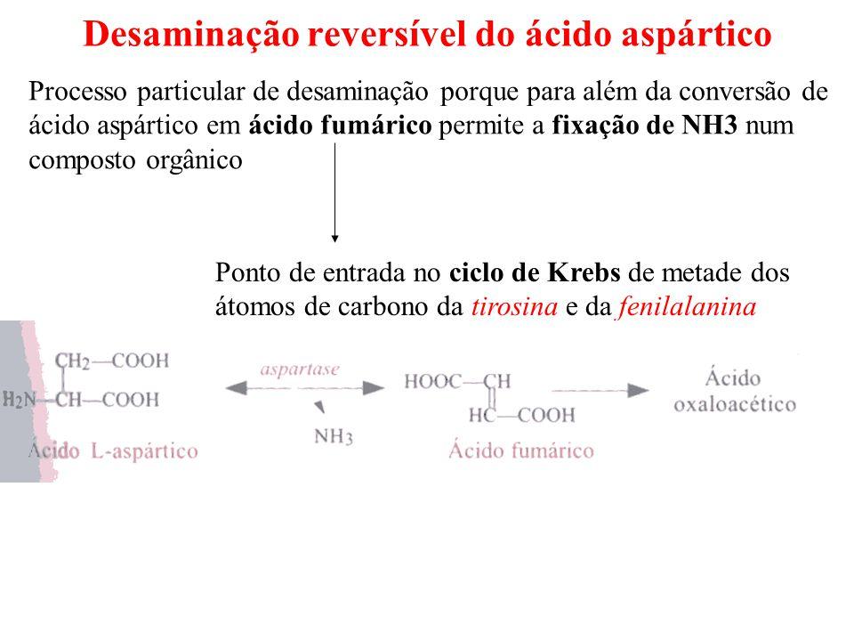 Desaminação reversível do ácido aspártico Processo particular de desaminação porque para além da conversão de ácido aspártico em ácido fumárico permit