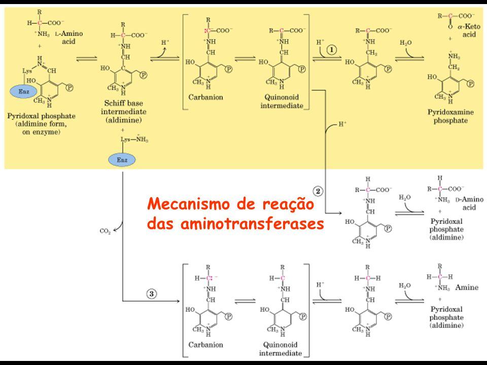 Mecanismo de reação das aminotransferases