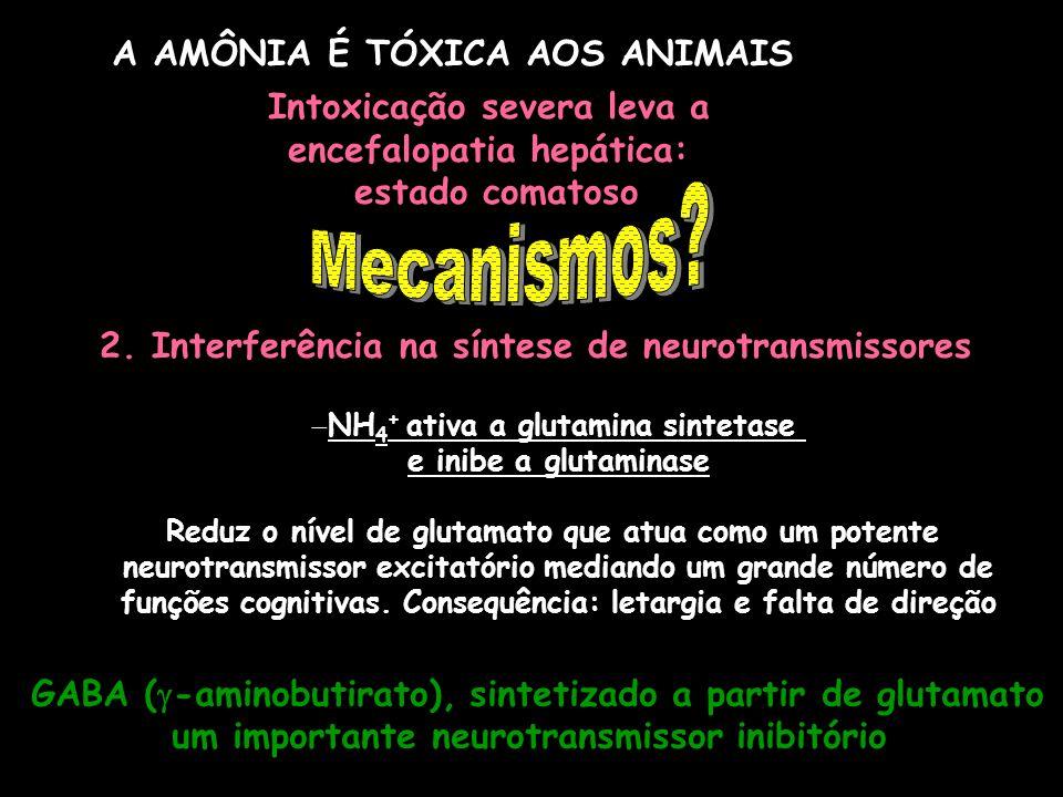 A AMÔNIA É TÓXICA AOS ANIMAIS Intoxicação severa leva a encefalopatia hepática: estado comatoso 2. Interferência na síntese de neurotransmissores NH 4
