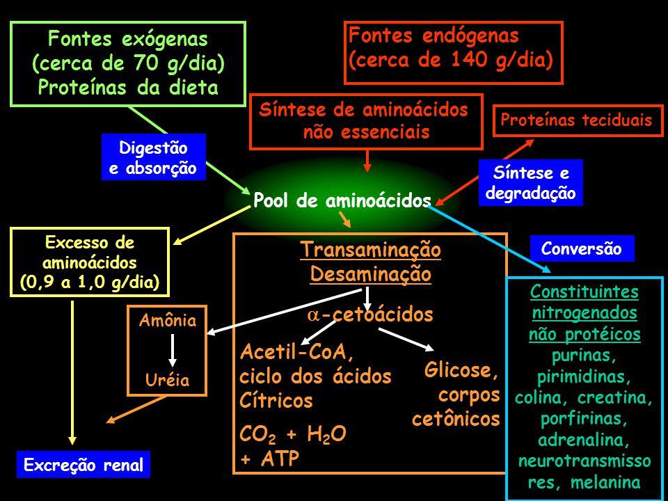 Fontes endógenas (cerca de 140 g/dia) Pool de aminoácidos Síntese de aminoácidos não essenciais Fontes exógenas (cerca de 70 g/dia) Proteínas da dieta