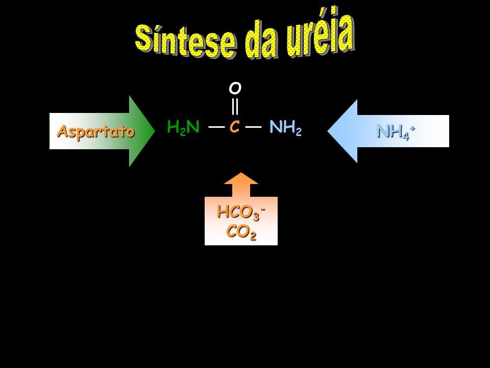 O C NH 2 H2NH2N HCO 3 - CO 2 NH 4 + Aspartato