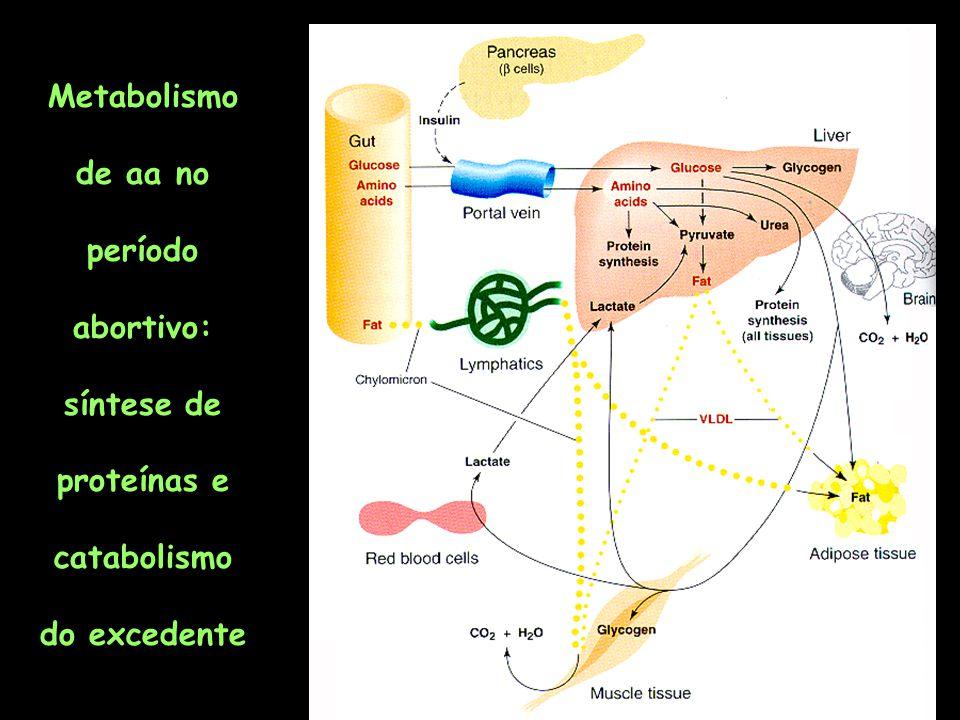 Metabolismo no jejum prolongado: maior mobilização de proteínas teciduais