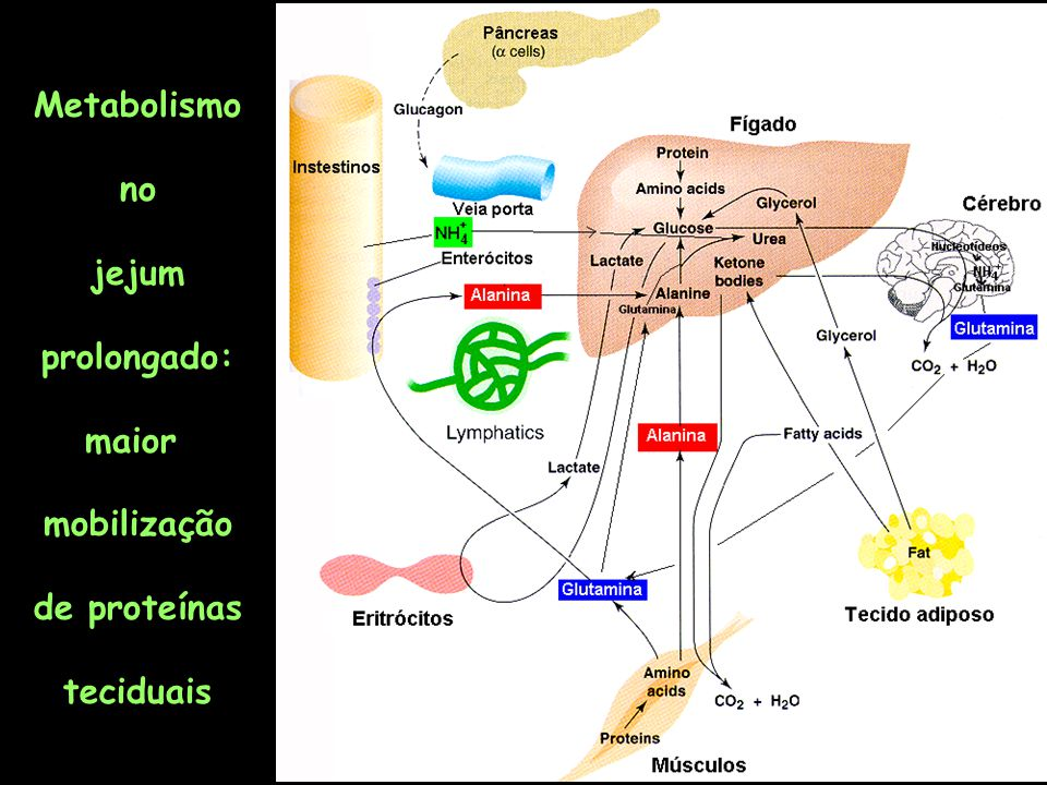 Determinação de atividade enzimática para o diagnóstico clínico HEPATITE AGUDA Dano celular em órgãos pode levar a um aumento enzimas específicas no soro Interferência no metabo- lismo celular o potencial energético e com isso afeta a integridade das estruturas de membranas Destruição e morte celular