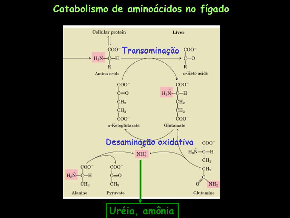 -cetoácido1 + aminoácido1 aminoácido2 + -cetoácido2 -cetoglutarato + aminoácido1 glutamato + -cetoácido2 -cetoglutarato + aspartato glutamato + oxaloacetato AST: aspartato aminotransferase -cetoglutarato + alanina glutamato + piruvato ALT: alanina aminotransferase AMINOTRANSFERASES (vários tecidos)