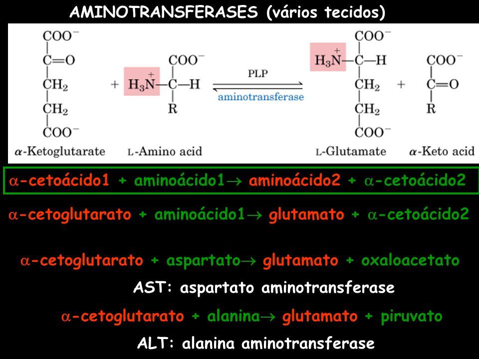 -cetoácido1 + aminoácido1 aminoácido2 + -cetoácido2 -cetoglutarato + aminoácido1 glutamato + -cetoácido2 -cetoglutarato + aspartato glutamato + oxaloa
