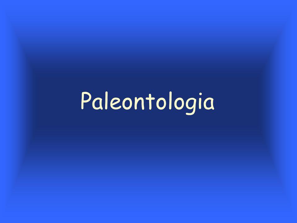 Tipos de fossilização Partes duras –A maior parte do registro fossilífero incrustação –cristalização de substâncias transportadas pela água na superfície da estrutura –mais comum em cavernas com revestimento de carbonato de cálcio (calcita e outras substâncias como pirita, limonita e a sílica) Permineralização –preenchimento de poros, canalículos e cavidades por minerais (ossos e troncos de árvores) –carbonato de cálcio e sílica