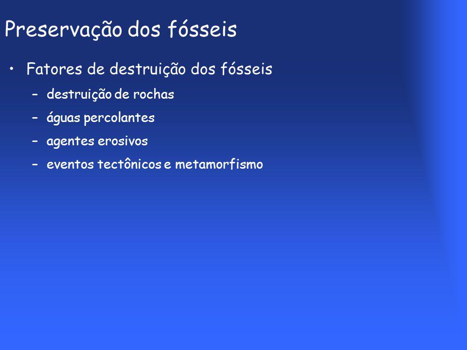 Preservação dos fósseis Fatores de destruição dos fósseis –destruição de rochas –águas percolantes –agentes erosivos –eventos tectônicos e metamorfismo