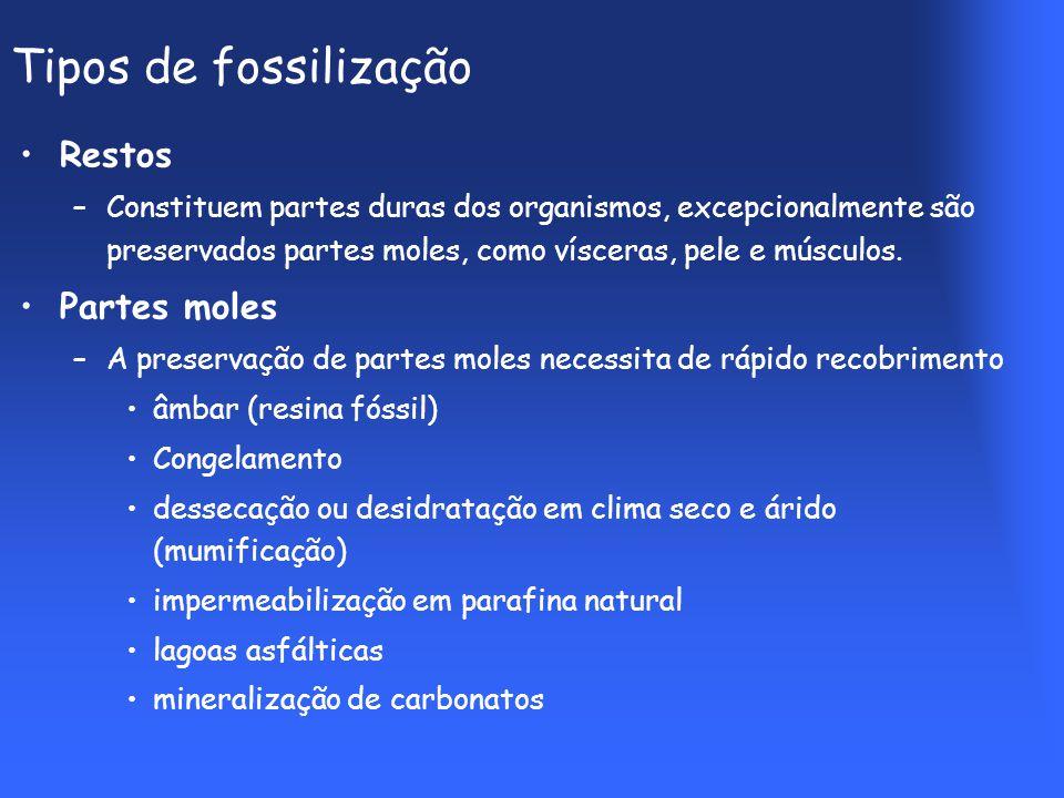 Tipos de fossilização Restos –Constituem partes duras dos organismos, excepcionalmente são preservados partes moles, como vísceras, pele e músculos.
