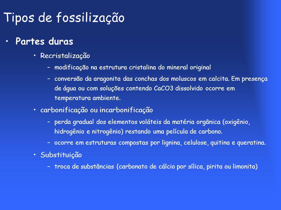 Tipos de fossilização Partes duras Recristalização –modificação na estrutura cristalina do mineral original –conversão da aragonita das conchas dos moluscos em calcita.