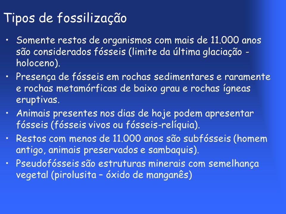 Tipos de fossilização Somente restos de organismos com mais de 11.000 anos são considerados fósseis (limite da última glaciação - holoceno).