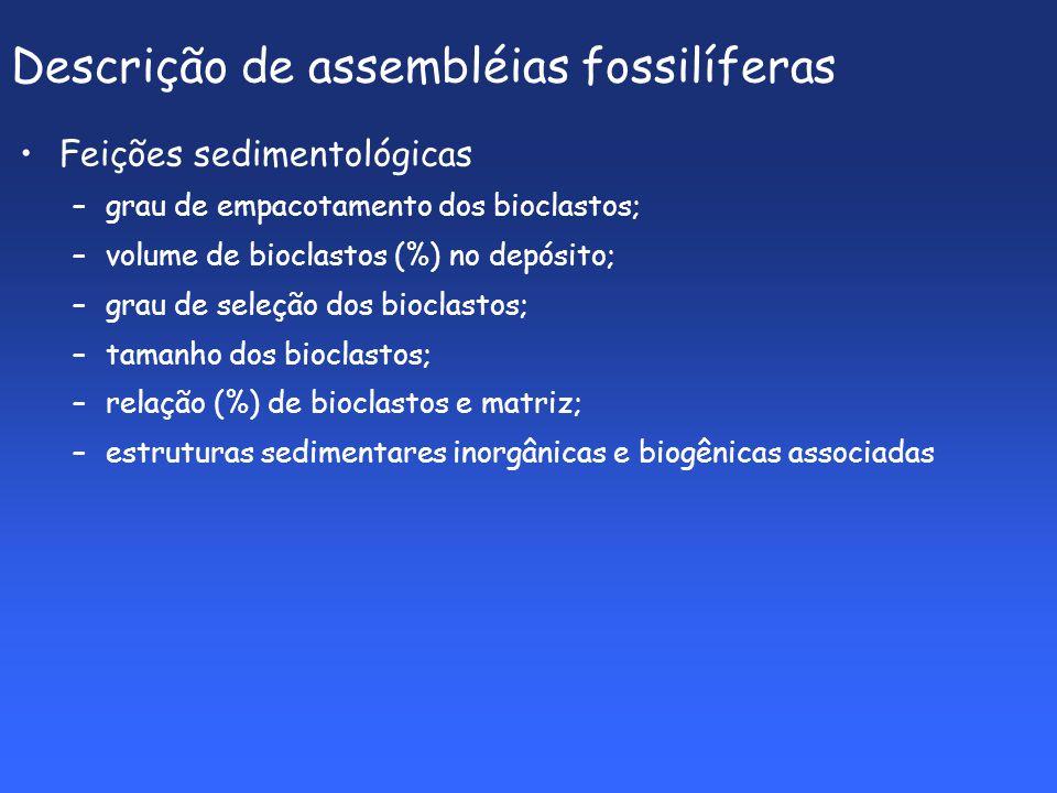 Descrição de assembléias fossilíferas Feições sedimentológicas –grau de empacotamento dos bioclastos; –volume de bioclastos (%) no depósito; –grau de seleção dos bioclastos; –tamanho dos bioclastos; –relação (%) de bioclastos e matriz; –estruturas sedimentares inorgânicas e biogênicas associadas