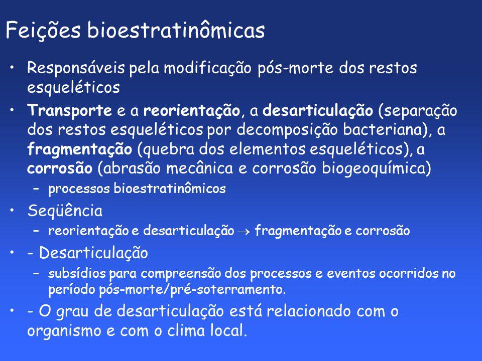 Feições bioestratinômicas Responsáveis pela modificação pós-morte dos restos esqueléticos Transporte e a reorientação, a desarticulação (separação dos restos esqueléticos por decomposição bacteriana), a fragmentação (quebra dos elementos esqueléticos), a corrosão (abrasão mecânica e corrosão biogeoquímica) –processos bioestratinômicos Seqüência –reorientação e desarticulação fragmentação e corrosão - Desarticulação –subsídios para compreensão dos processos e eventos ocorridos no período pós-morte/pré-soterramento.