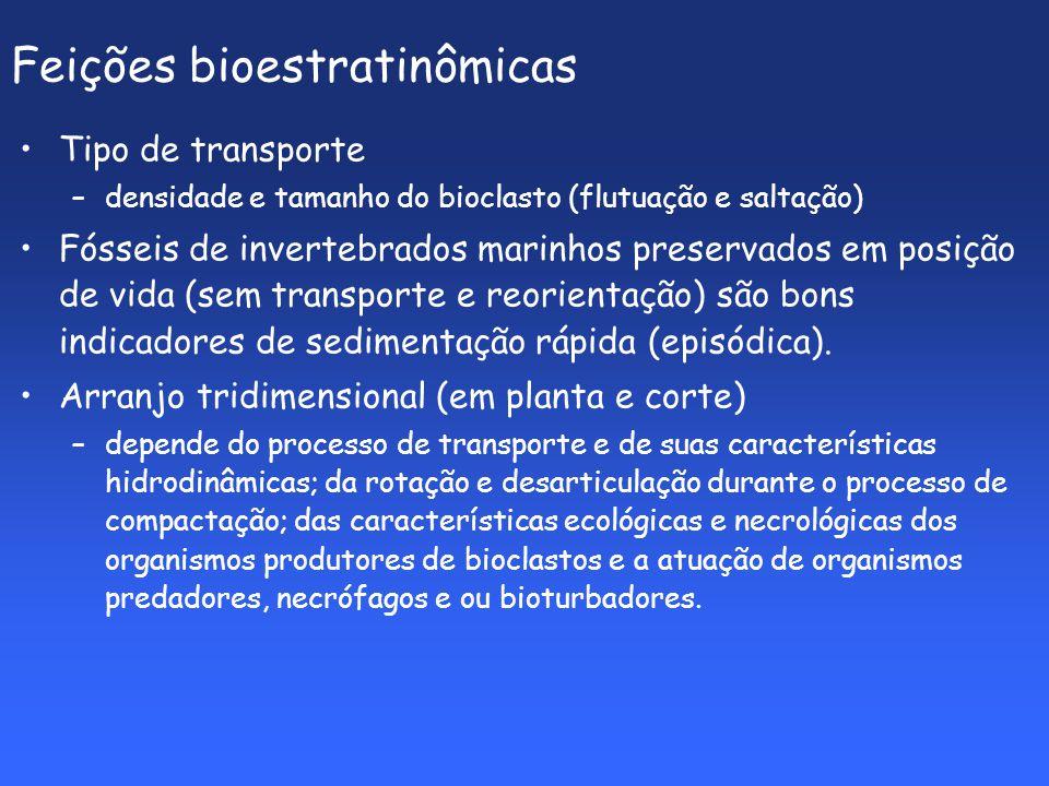 Feições bioestratinômicas Tipo de transporte –densidade e tamanho do bioclasto (flutuação e saltação) Fósseis de invertebrados marinhos preservados em posição de vida (sem transporte e reorientação) são bons indicadores de sedimentação rápida (episódica).