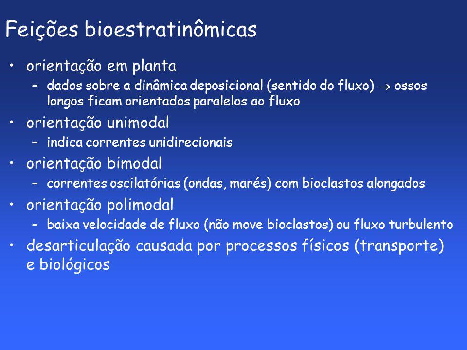 Feições bioestratinômicas orientação em planta –dados sobre a dinâmica deposicional (sentido do fluxo) ossos longos ficam orientados paralelos ao fluxo orientação unimodal –indica correntes unidirecionais orientação bimodal –correntes oscilatórias (ondas, marés) com bioclastos alongados orientação polimodal –baixa velocidade de fluxo (não move bioclastos) ou fluxo turbulento desarticulação causada por processos físicos (transporte) e biológicos