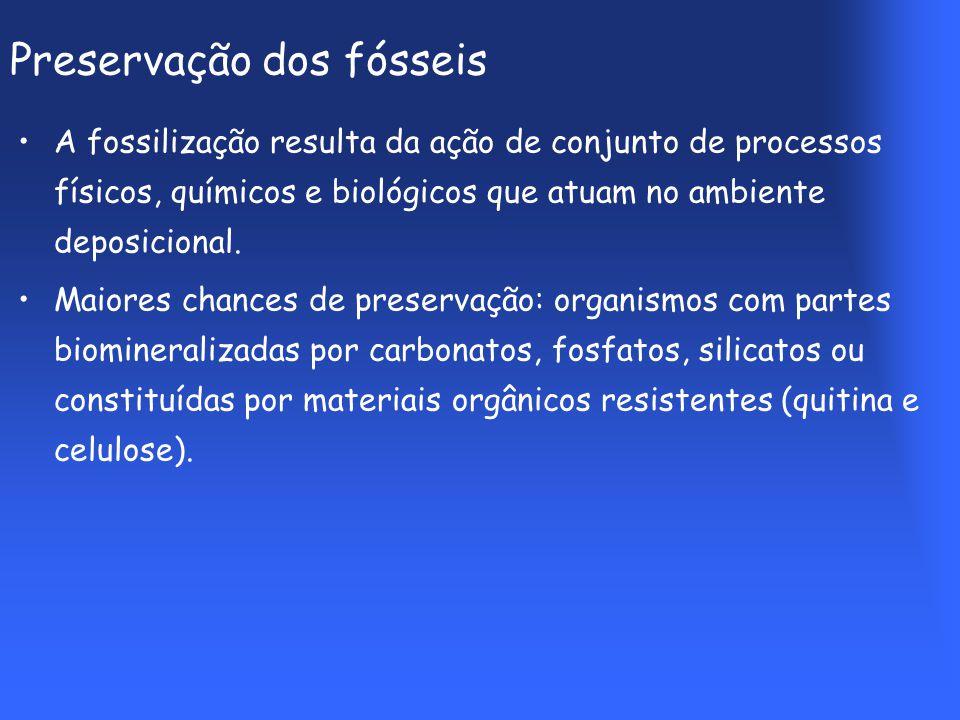 Preservação dos fósseis A fossilização resulta da ação de conjunto de processos físicos, químicos e biológicos que atuam no ambiente deposicional.