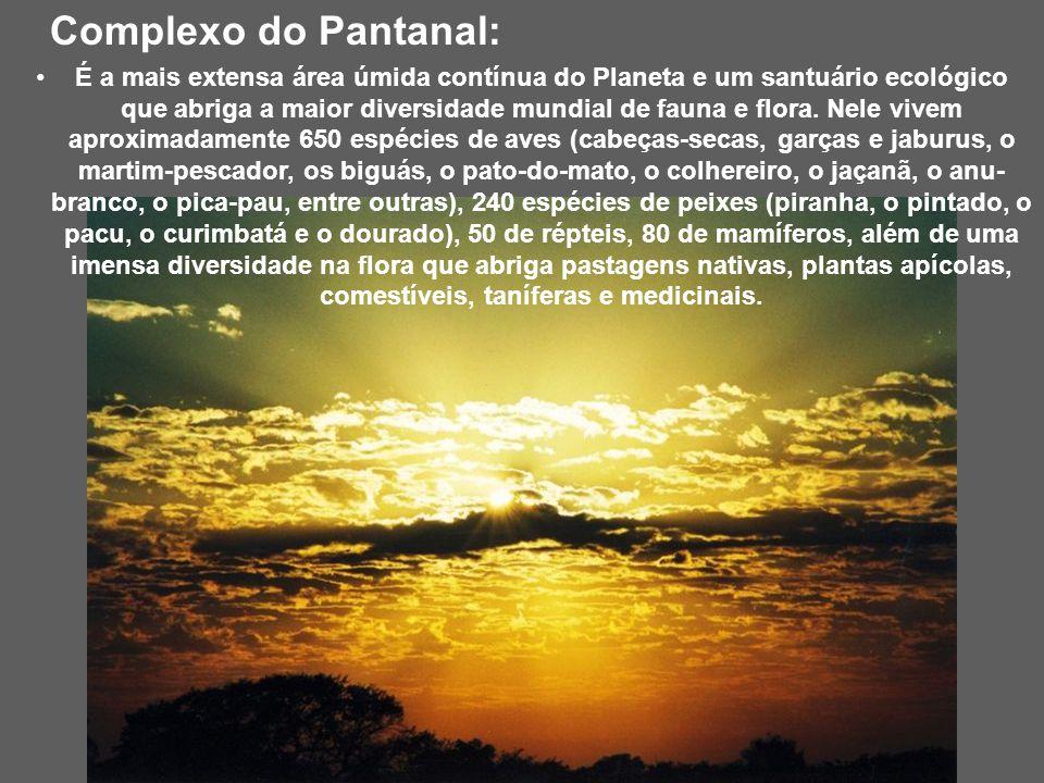 Por do sol no Pantanal Possui atrativos naturais e culturais que podem ser vistos ao participar de passeios turísticos. Os cenários são distintos e co