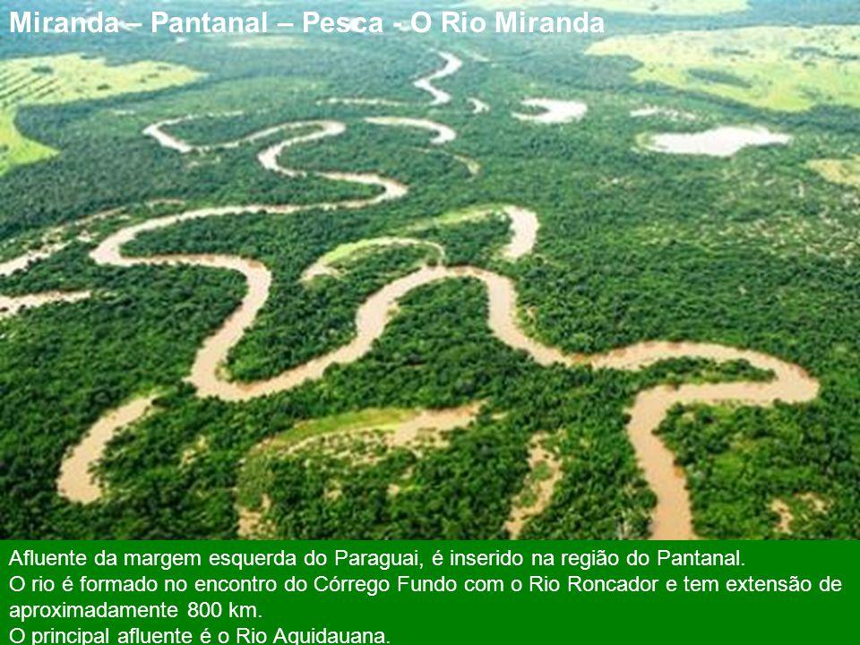 Miranda- Hotel Fazenda São Francisco Turismo É famosa no Brasil pelo Pantanal e pelo trem da Estrada de Ferro da Novoeste (antiga Estrada de Ferro Nor