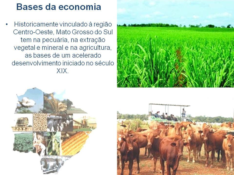 Campo Grande - Região central Turismo urbano Campo Grande: - Centro de passagem ao Pantanal, uma região bonita com abundância de animais selvagens e paisagens maravilhosas.