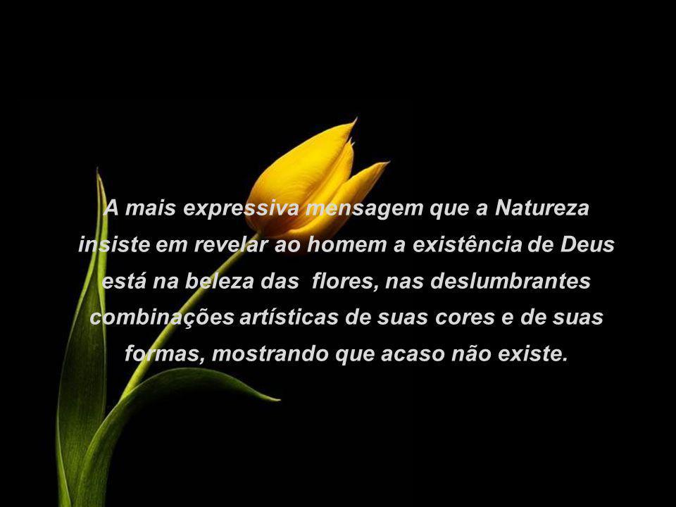 A Natureza está a todo momento nos falando de beleza, de harmonia, de inteligência, da presença de Deus.