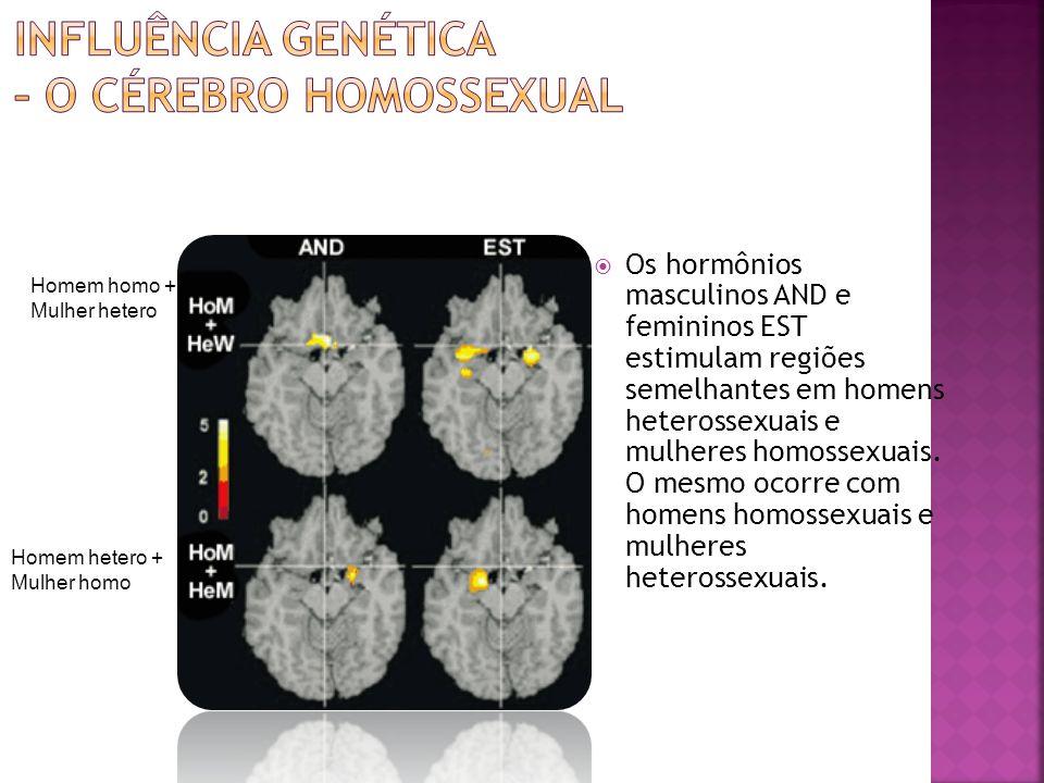 Os hormônios masculinos AND e femininos EST estimulam regiões semelhantes em homens heterossexuais e mulheres homossexuais. O mesmo ocorre com homens