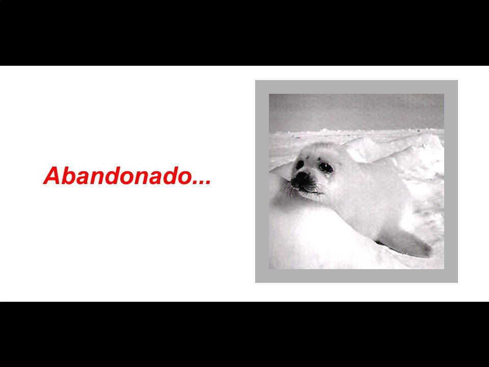 Carrancudo...
