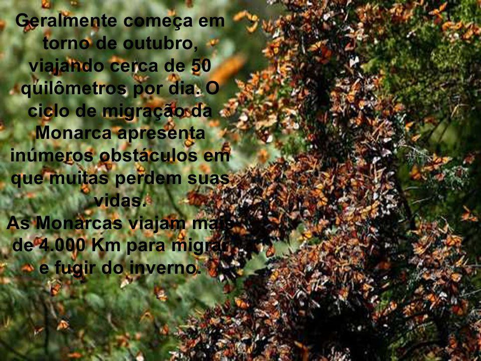 A migração das Borboletas Monarcas é um dos mais significativos eventos que acontece em nosso planeta, a migração da Borboleta Monarca começa no Canad