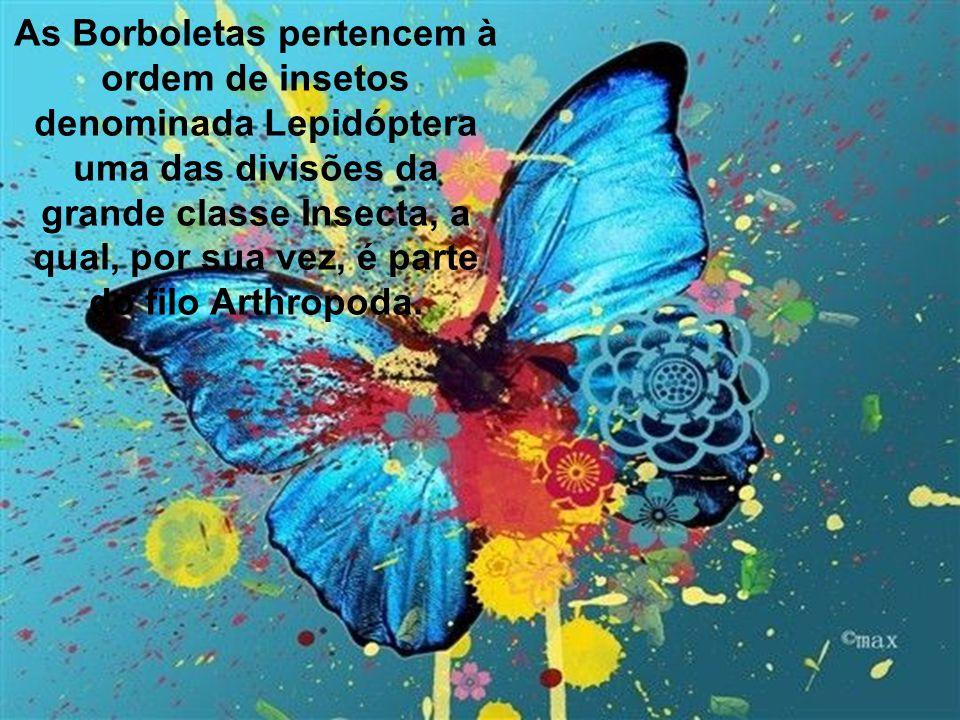 As Borboletas pertencem à ordem de insetos denominada Lepidóptera uma das divisões da grande classe Insecta, a qual, por sua vez, é parte do filo Arthropoda.