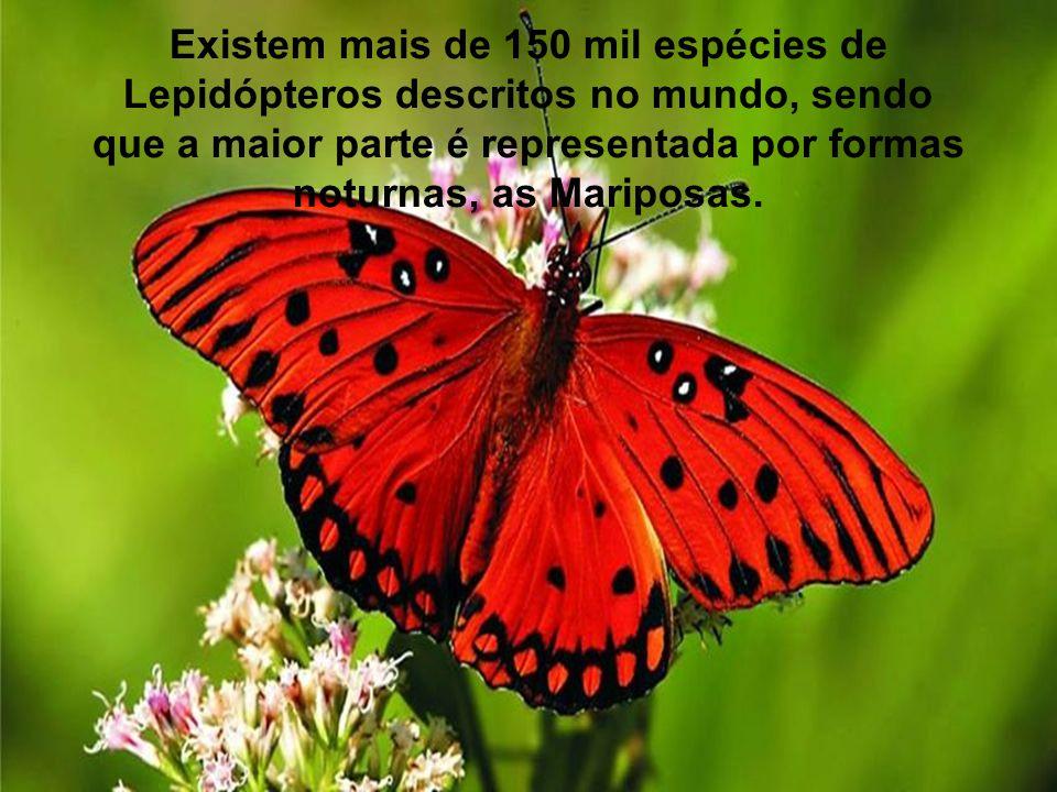 Existem mais de 150 mil espécies de Lepidópteros descritos no mundo, sendo que a maior parte é representada por formas noturnas, as Mariposas.