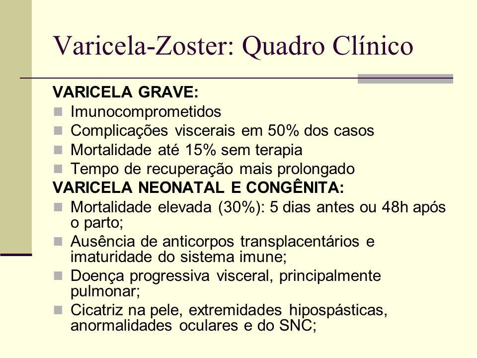Varicela-Zoster: Quadro Clínico VARICELA GRAVE: Imunocomprometidos Complicações viscerais em 50% dos casos Mortalidade até 15% sem terapia Tempo de recuperação mais prolongado VARICELA NEONATAL E CONGÊNITA: Mortalidade elevada (30%): 5 dias antes ou 48h após o parto; Ausência de anticorpos transplacentários e imaturidade do sistema imune; Doença progressiva visceral, principalmente pulmonar; Cicatriz na pele, extremidades hipospásticas, anormalidades oculares e do SNC;