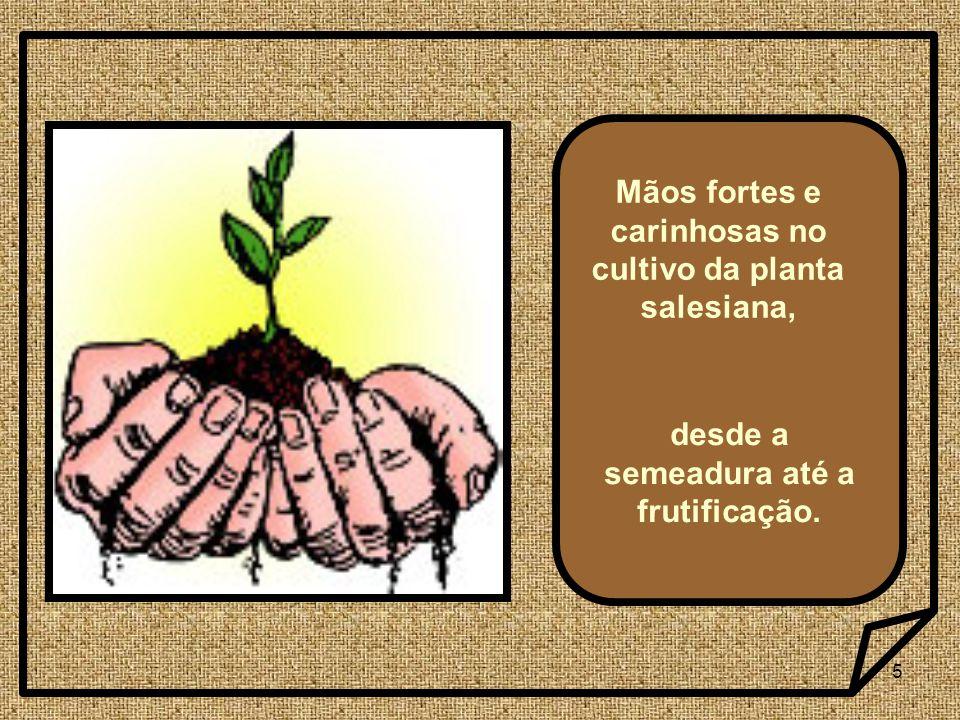5 Mãos fortes e carinhosas no cultivo da planta salesiana, desde a semeadura até a frutificação.