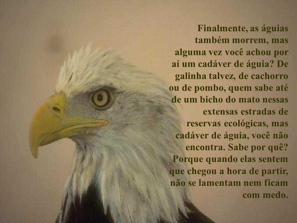 A águia é usada como símbolo dos que esperam no Senhor e Nele confiam. Esse bicho é interessante desde sua origem. Um frango está pronto para ser vend