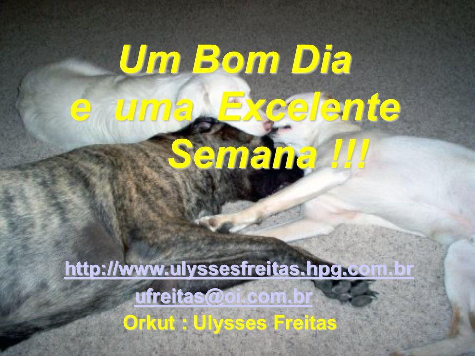 Um Bom Dia e uma Excelente Semana !!! ufreitas@oi.com.br ufreitas@oi.com.brufreitas@oi.com.br http://www.ulyssesfreitas.hpg.com.br Orkut : Ulysses Fre
