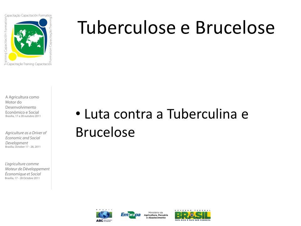 Tuberculose e Brucelose Luta contra a Tuberculina e Brucelose