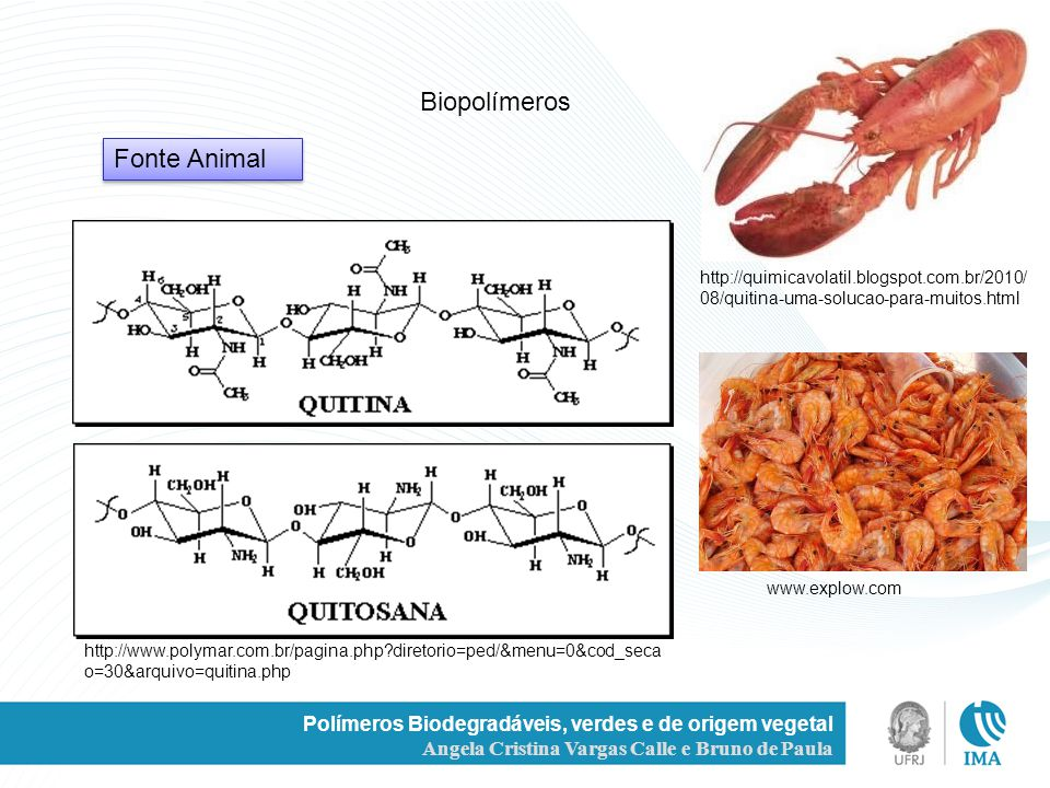 Polímeros Biodegradáveis, verdes e de origem vegetal Angela Cristina Vargas Calle e Bruno de Paula Biopolímeros Fonte Animal http://quimicavolatil.blo