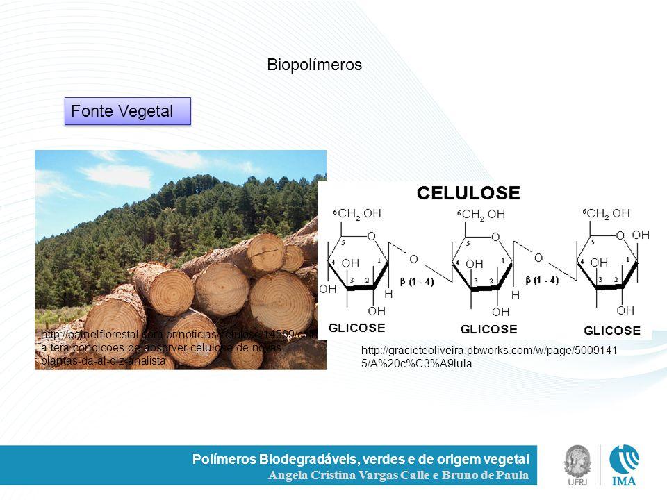 Polímeros Biodegradáveis, verdes e de origem vegetal Angela Cristina Vargas Calle e Bruno de Paula Fonte Vegetal Biopolímeros http://painelflorestal.c