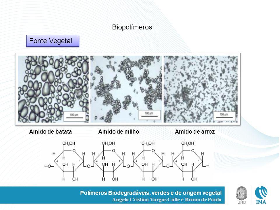 Polímeros Biodegradáveis, verdes e de origem vegetal Angela Cristina Vargas Calle e Bruno de Paula Fonte Vegetal Biopolímeros Amido de batata Amido de