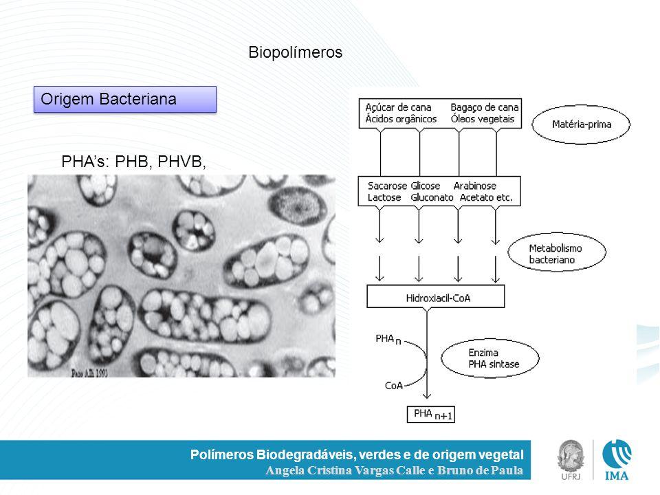 Polímeros Biodegradáveis, verdes e de origem vegetal Angela Cristina Vargas Calle e Bruno de Paula Biopolímeros PHAs: PHB, PHVB, Origem Bacteriana