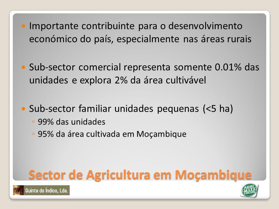 Sector de Agricultura em Moçambique O sector familiar pratica agricultura de subsistência utlizando na sua maioria tecnologias inapropriadas, com poucos meios.