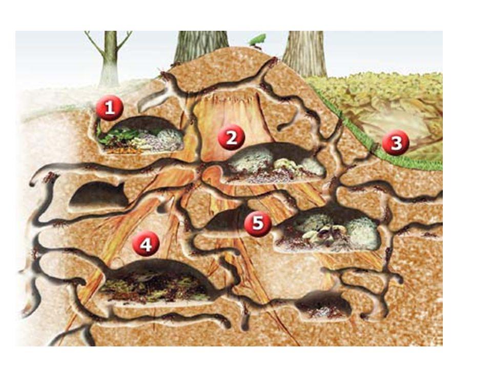 Formação do solo O solo se forma por um processo chamado intemperismo.