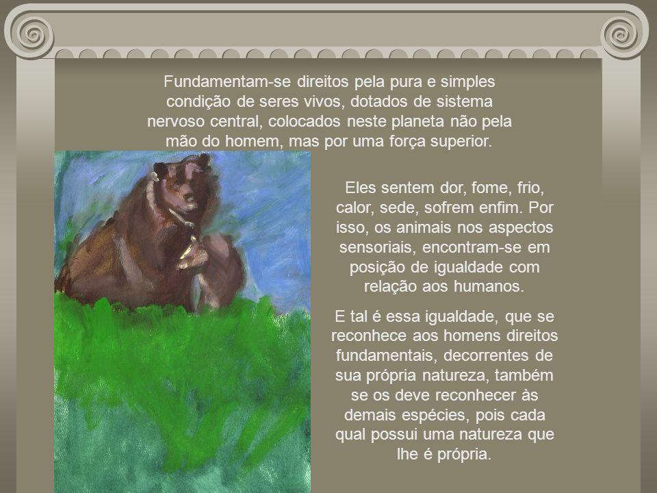 A não-violência contra os animais insere-se no rol dos direitos dos homens, não em razão de se reconhecer aos humanos a prerrogativa, a faculdade de n