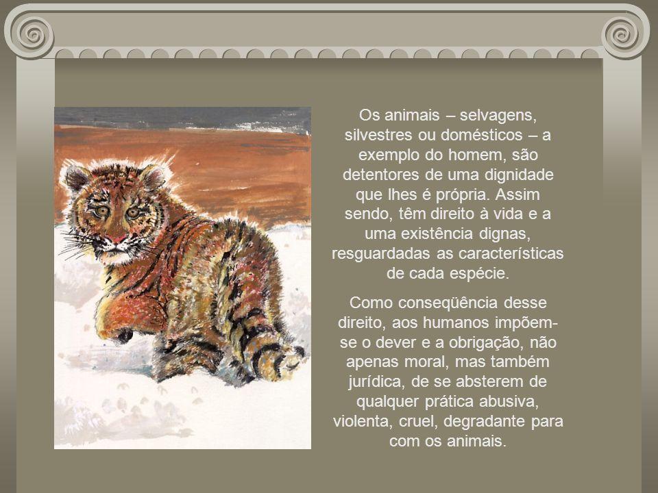 Cada espécie possui direitos que são inerentes à sua própria natureza. Porém, não fazem parte do rol de direitos dos animais, por exemplo, a permissão