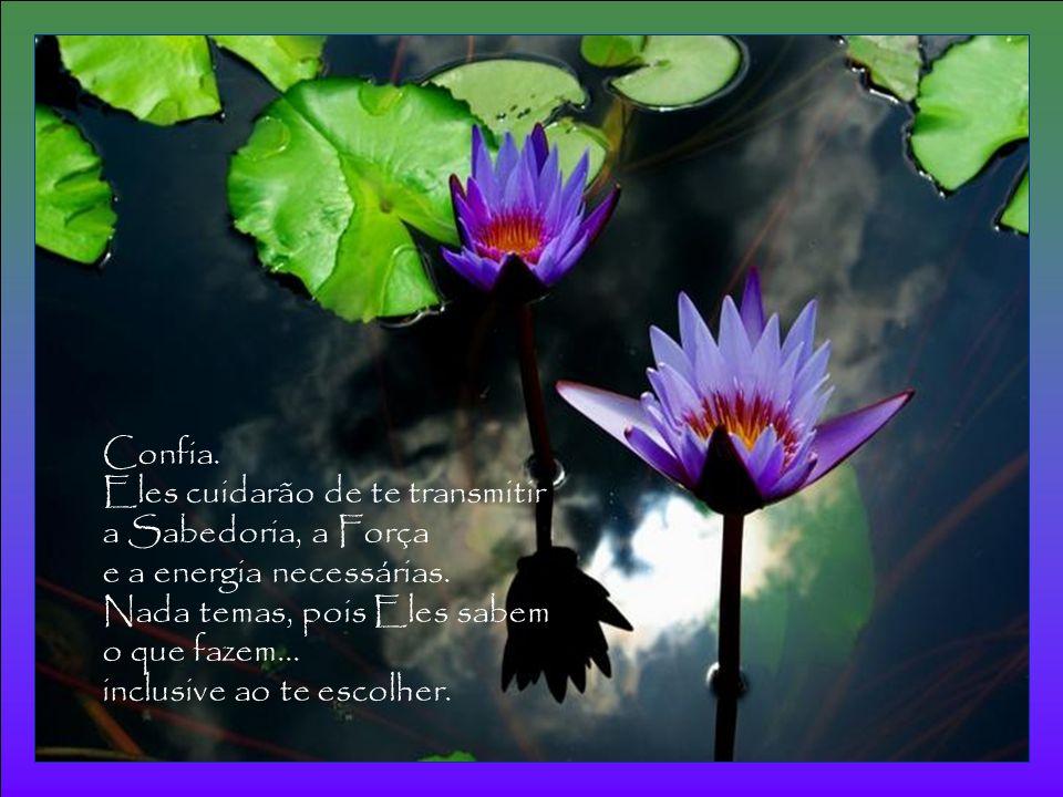 É pelo amor que depositas no cumprimento de tua missão que flui até ti o Amor de todos os Mestres que se empenham nessa mesma missão e que fazem de ti