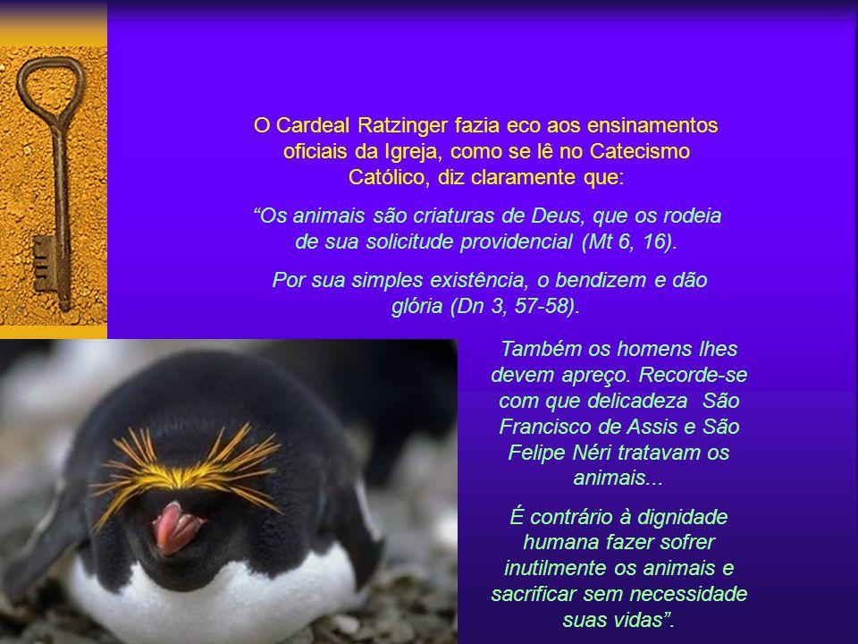 O Cardeal Ratzinger fazia eco aos ensinamentos oficiais da Igreja, como se lê no Catecismo Católico, diz claramente que: Os animais são criaturas de Deus, que os rodeia de sua solicitude providencial (Mt 6, 16).