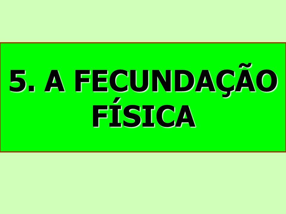 5. A FECUNDAÇÃO FÍSICA