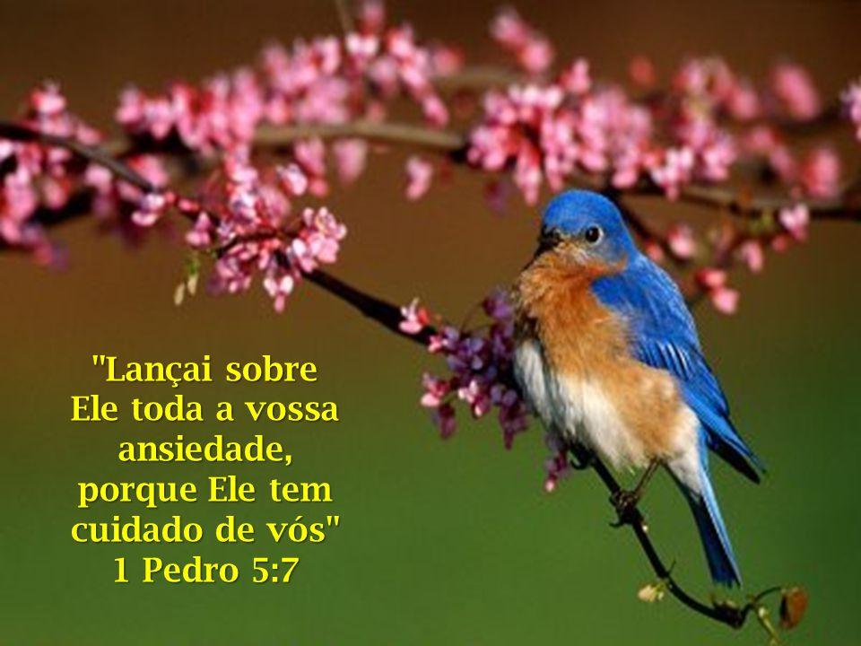 É Ele quem renova suas forças e sua fé. E se Ele cuida de um passarinho, imagina o que não fará por você, que é seu filho amado?! Basta você CRER!