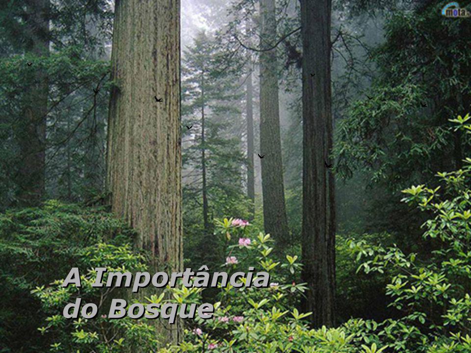 A Importância do Bosque A Importância do Bosque