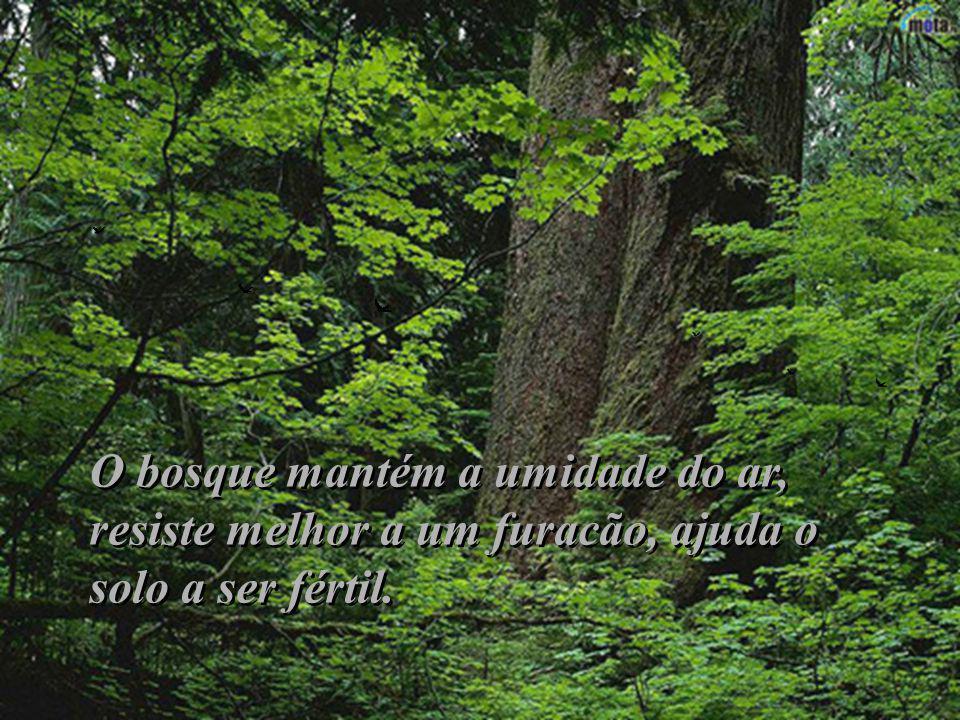 Vocês estão juntos porque um bosque é sempre mais forte que uma árvore solitária – respondeu Nasrudin Vocês estão juntos porque um bosque é sempre mai