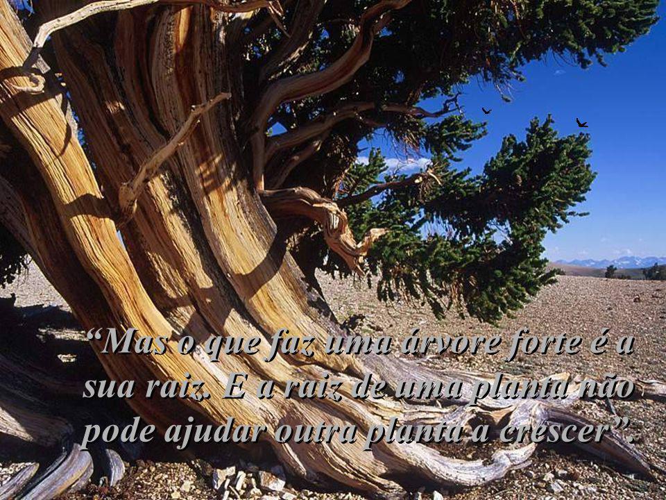 Mas o que faz uma árvore forte é a sua raiz.