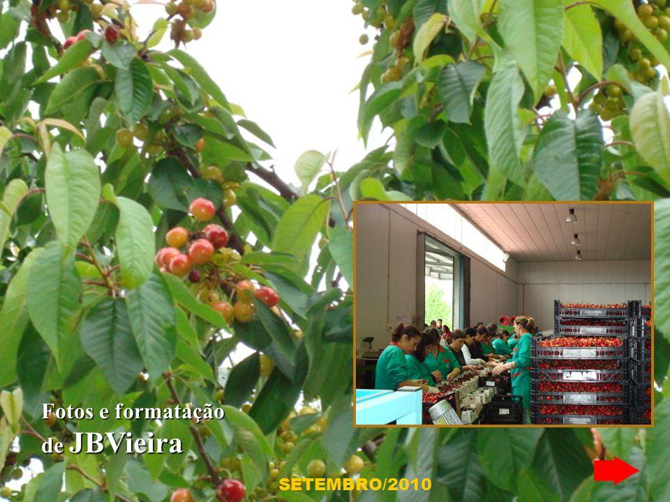 Em Resende, as muito apreciadas cerejas são uma mais valia para aquela região